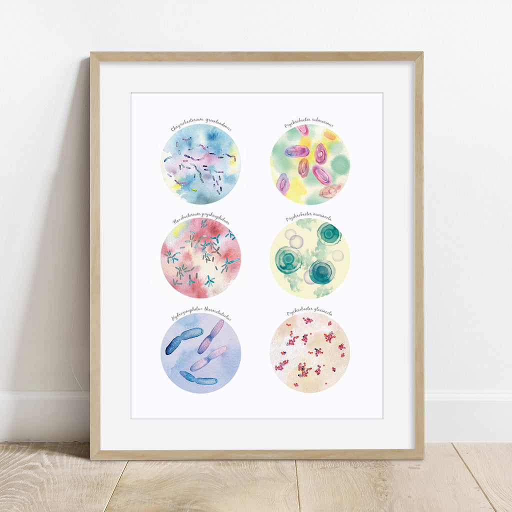 Psychrophilic Bacteria Collection Print