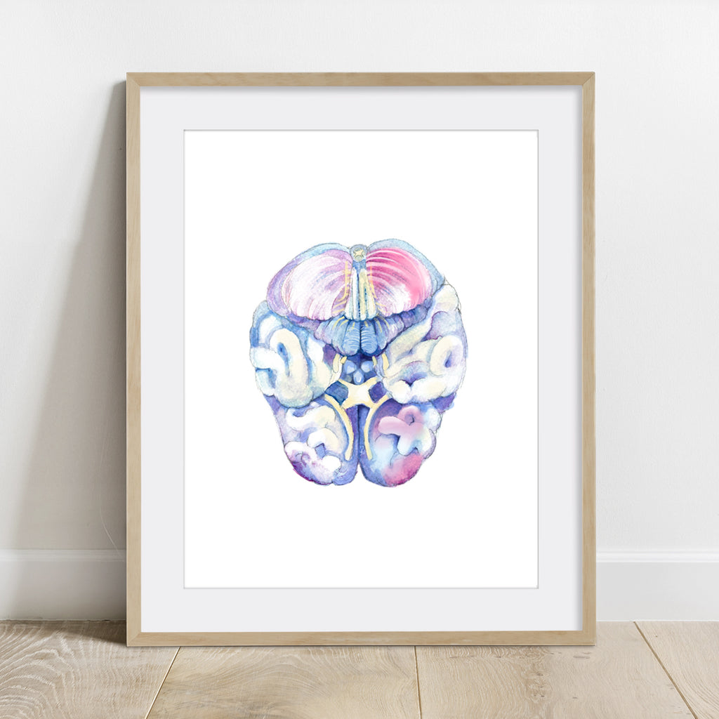 Human Brain Watercolor Print