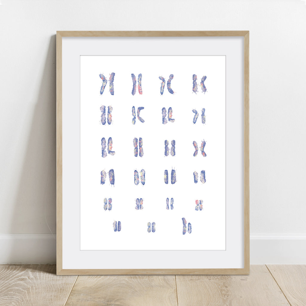 Male Chromosomes Art Print