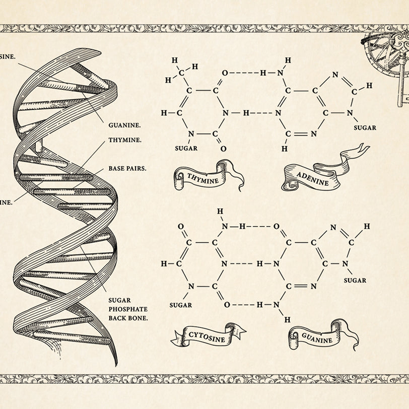 Medieval Style DNA with Chemical structure