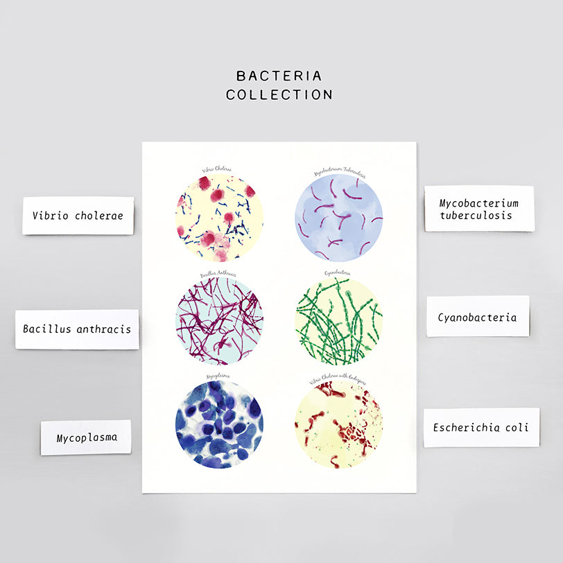 Bacteria Art Collection Print