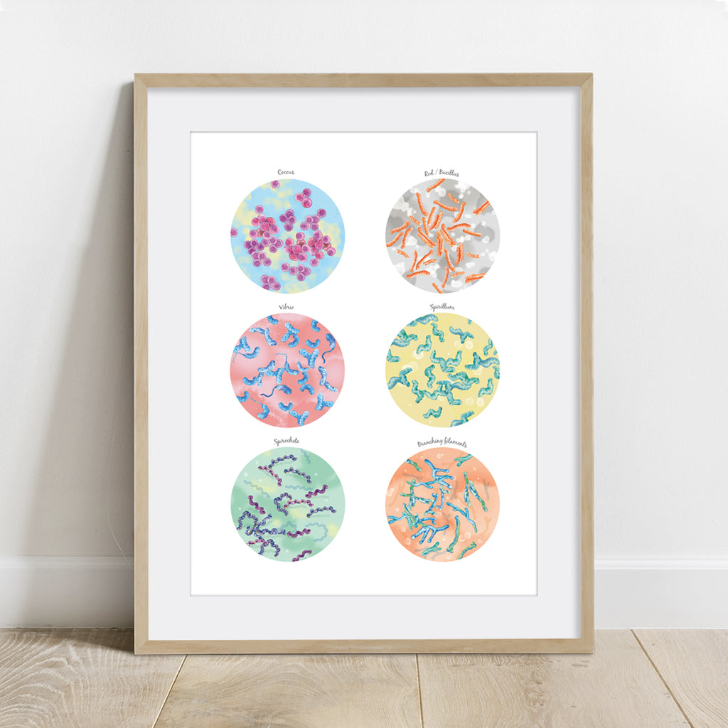 Bacterial Shape Collection Print