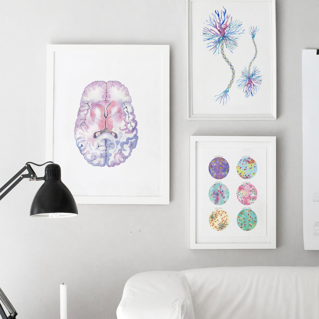Human Brain Cross Section Art Print
