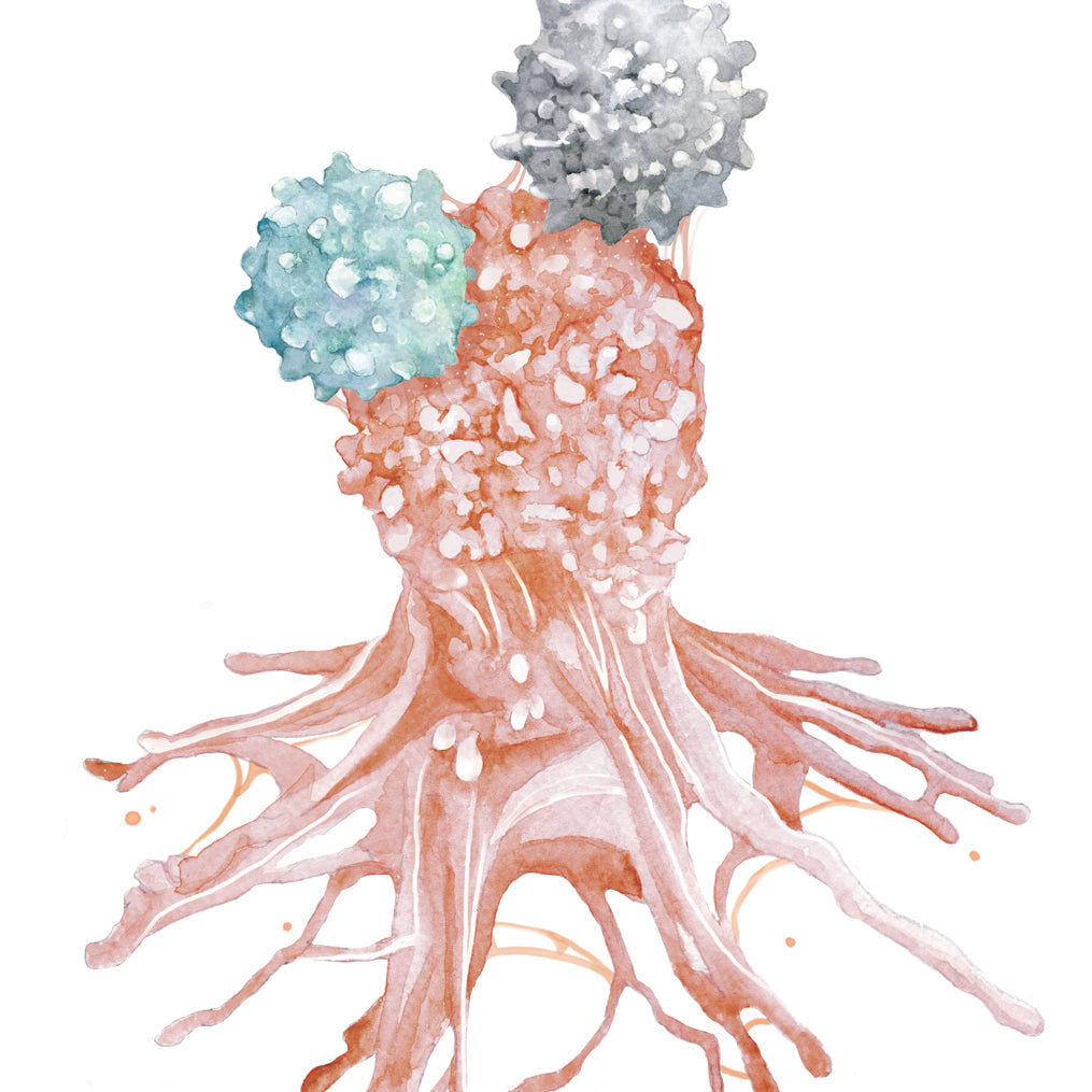 Immune Cell Defeating Cancer Cell Art