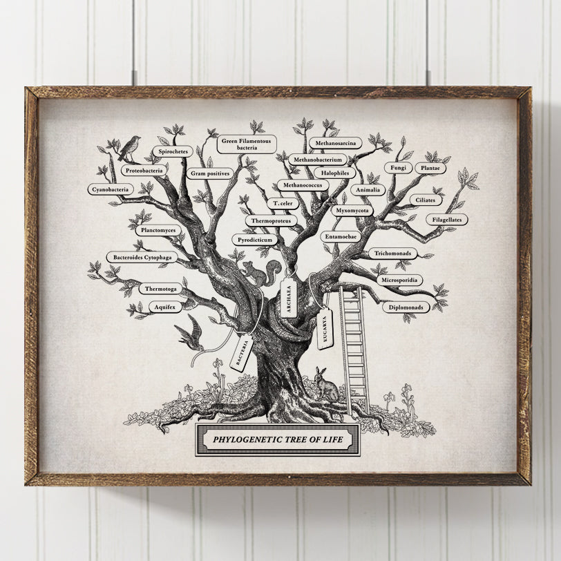 Microbiology Phylogenetic Tree Of Life Print (Stone)