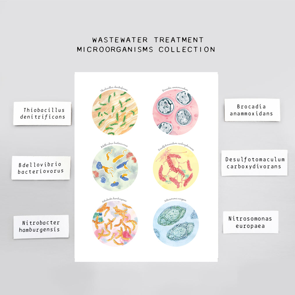 Wastewater Treatment Microorganisms Collection Print