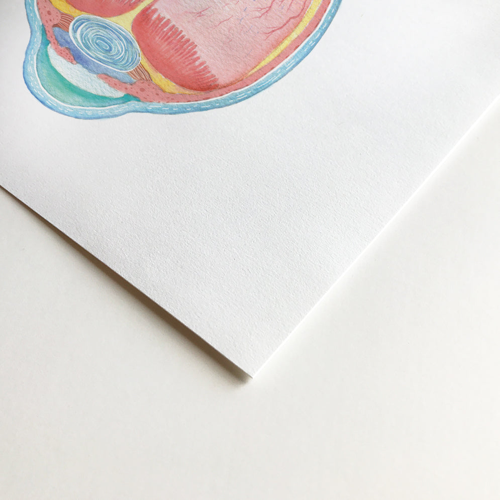 Eye Anatomy Watercolor Art Print