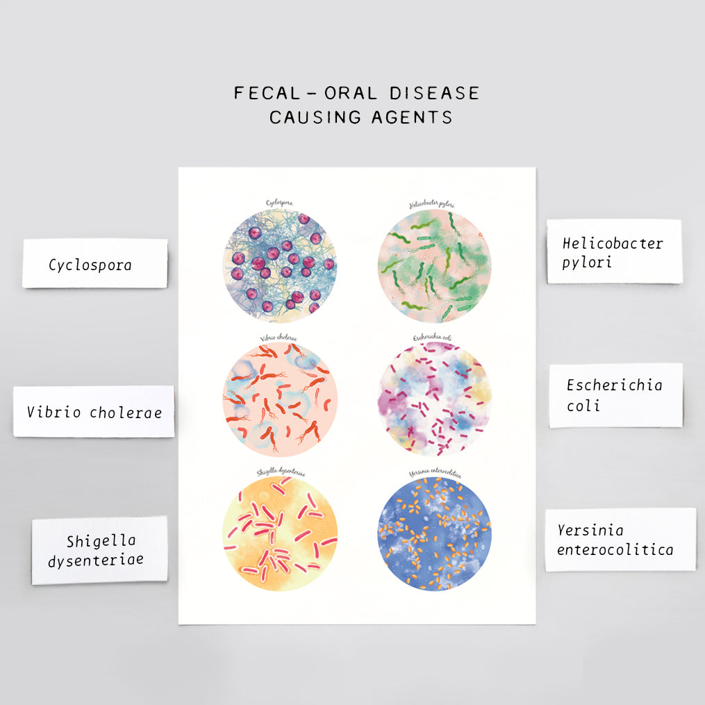Disease Causing Agents by Fecal - Oral Route