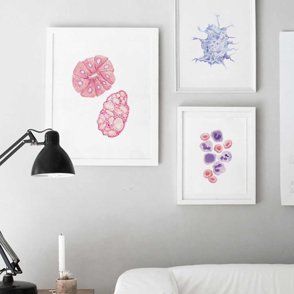 Gland cells Art Print