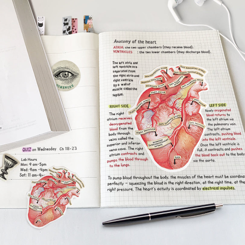 Anatomical Human Heart Vinyl Sticker