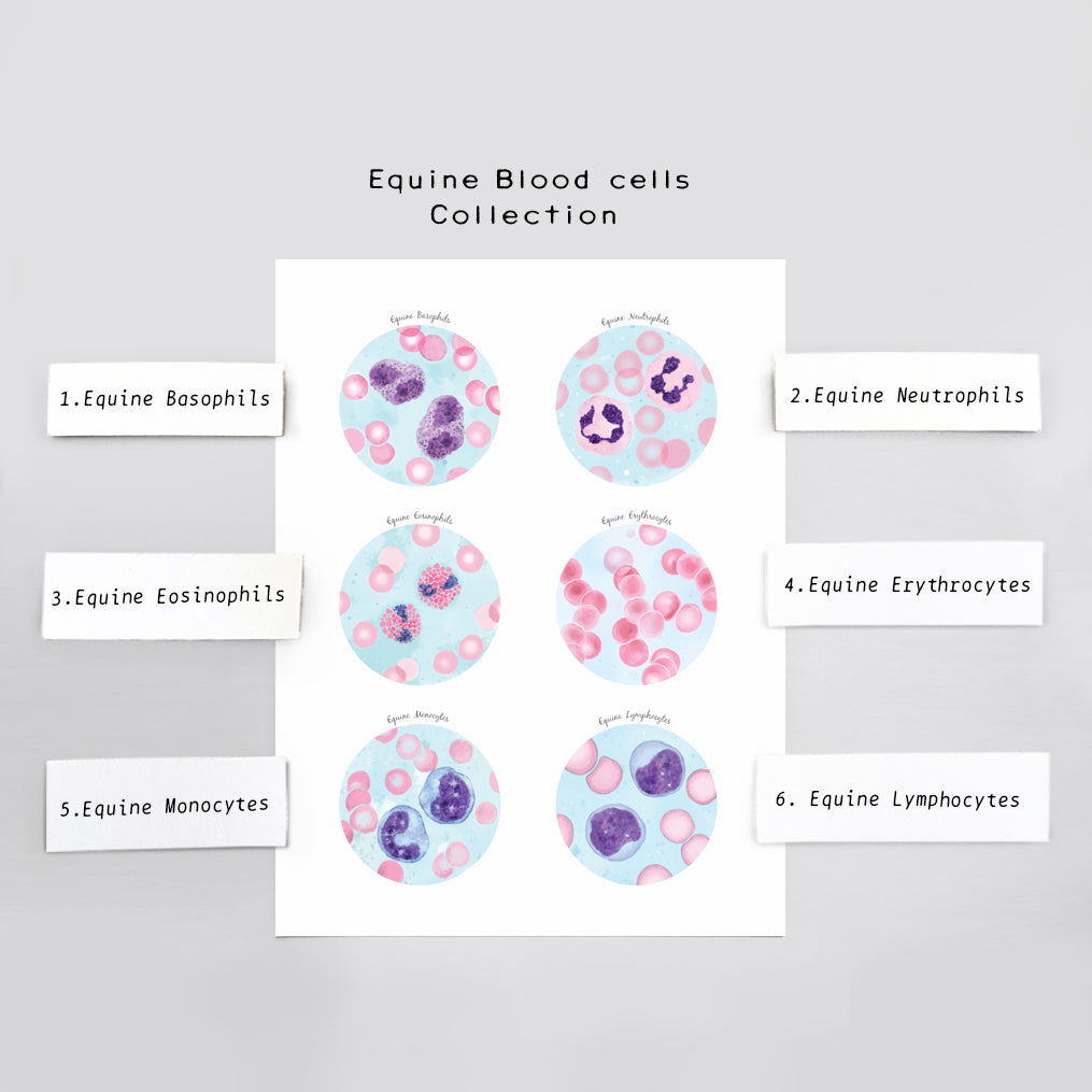 Equine Blood Cells Art Print