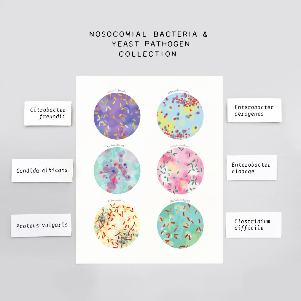 Nosocomial Bacteria, Yeast Pathogen Collection Print
