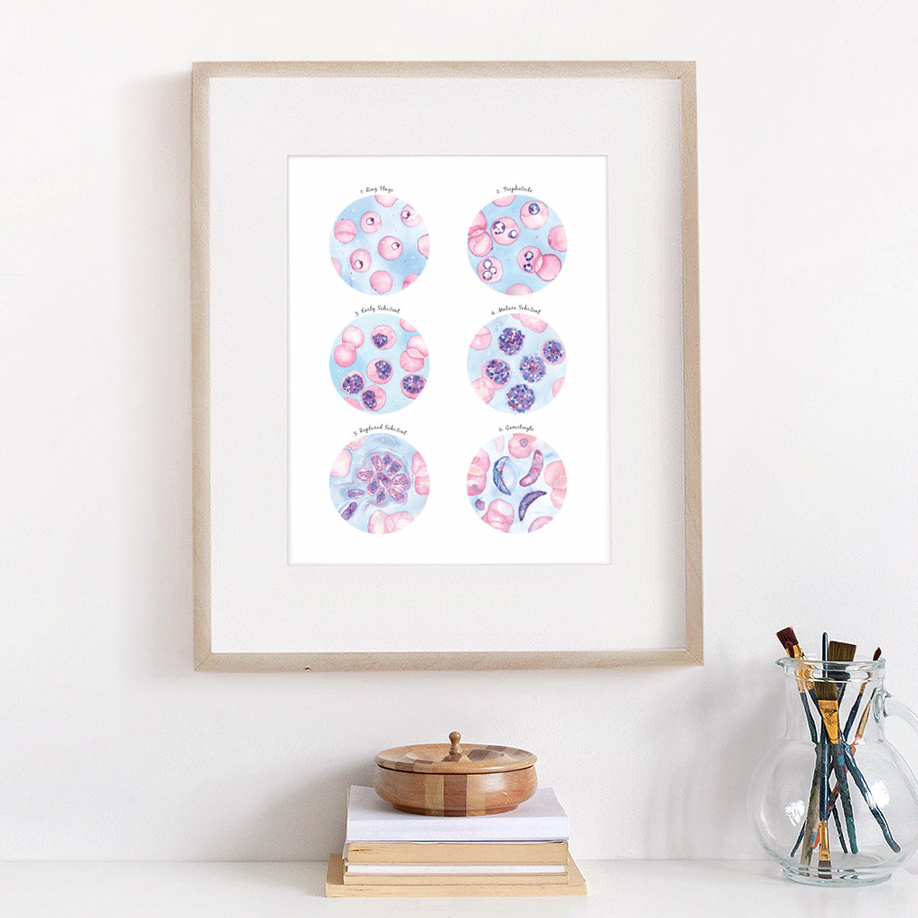 Plasmodium falciparum Morphology Art Print