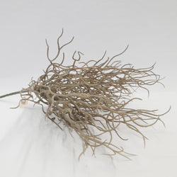 BUSH GRASS TAX H30CM GREY