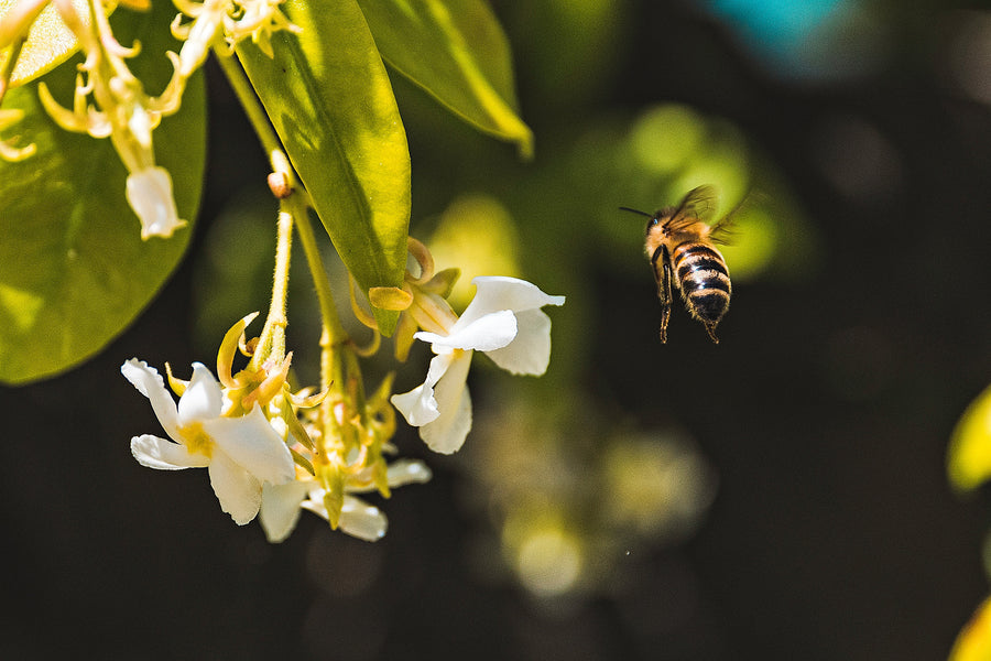 Why Bees Are Important To Us?