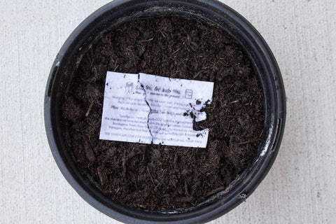 Luxey Cup Tree Germination