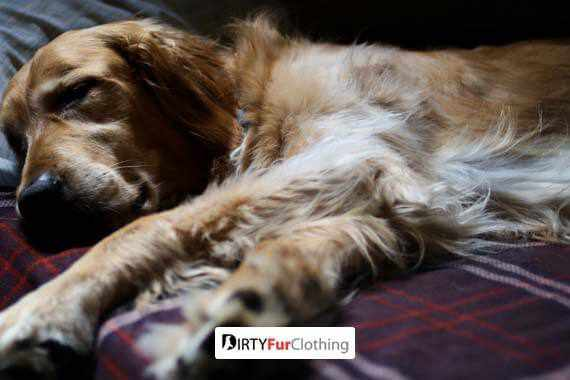 Should Your Dog Sleep In Your Bed At Night?
