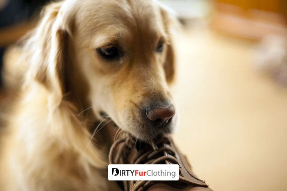 Will Eating Leather Hurt Your Dog?