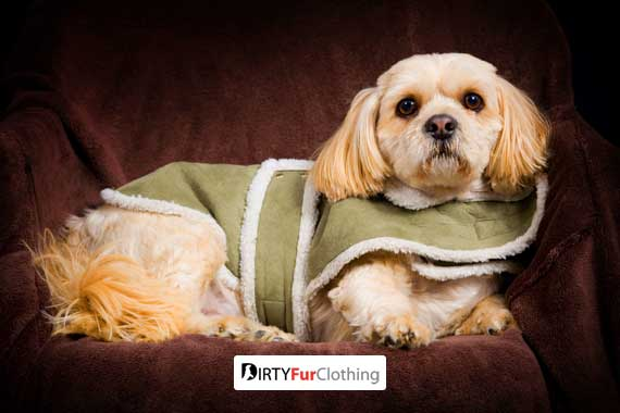 Does Your Dog Need Winter Clothes?