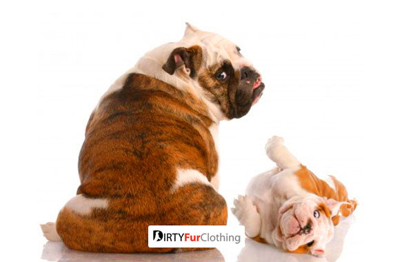 FLATULENCE - FARTING AND GAS PROBLEMS IN DOGS