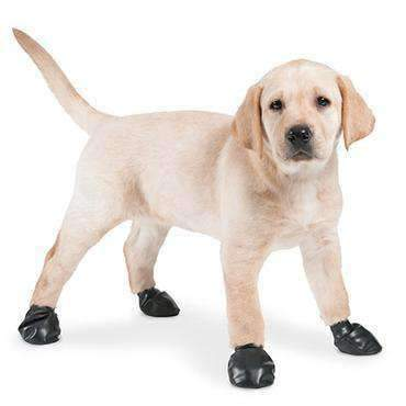 Dog Boots & Shoes