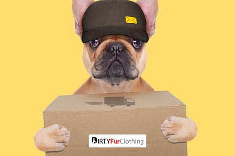 dog holding shipping box