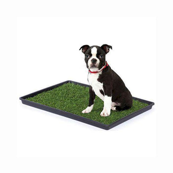 Prevue Hendryx Light Weight Medium Size Dog Breeds Tinkle Turf Training Tool - Pet Waste Disposal System-Prevue Hendryx-DirtyFurClothing