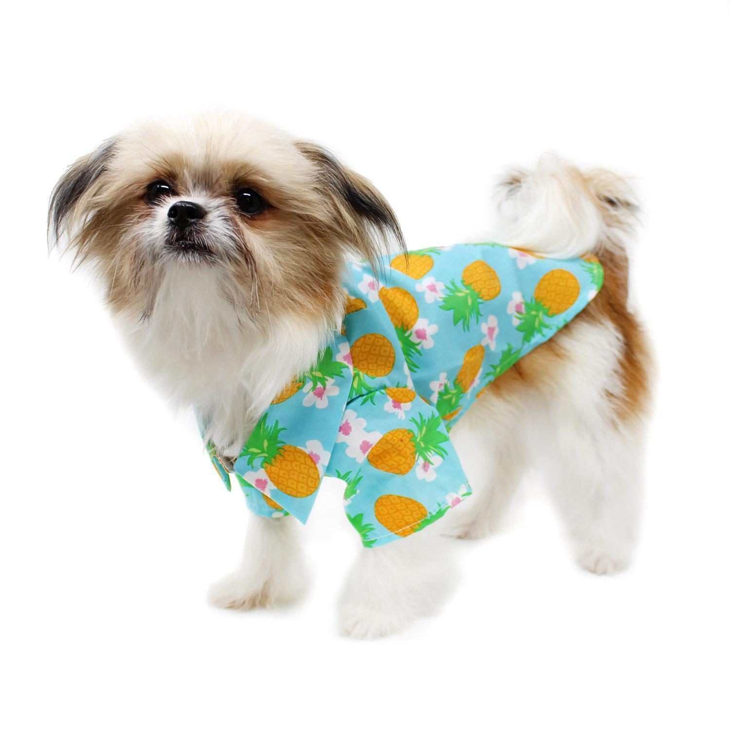 dog in pineapple shirt