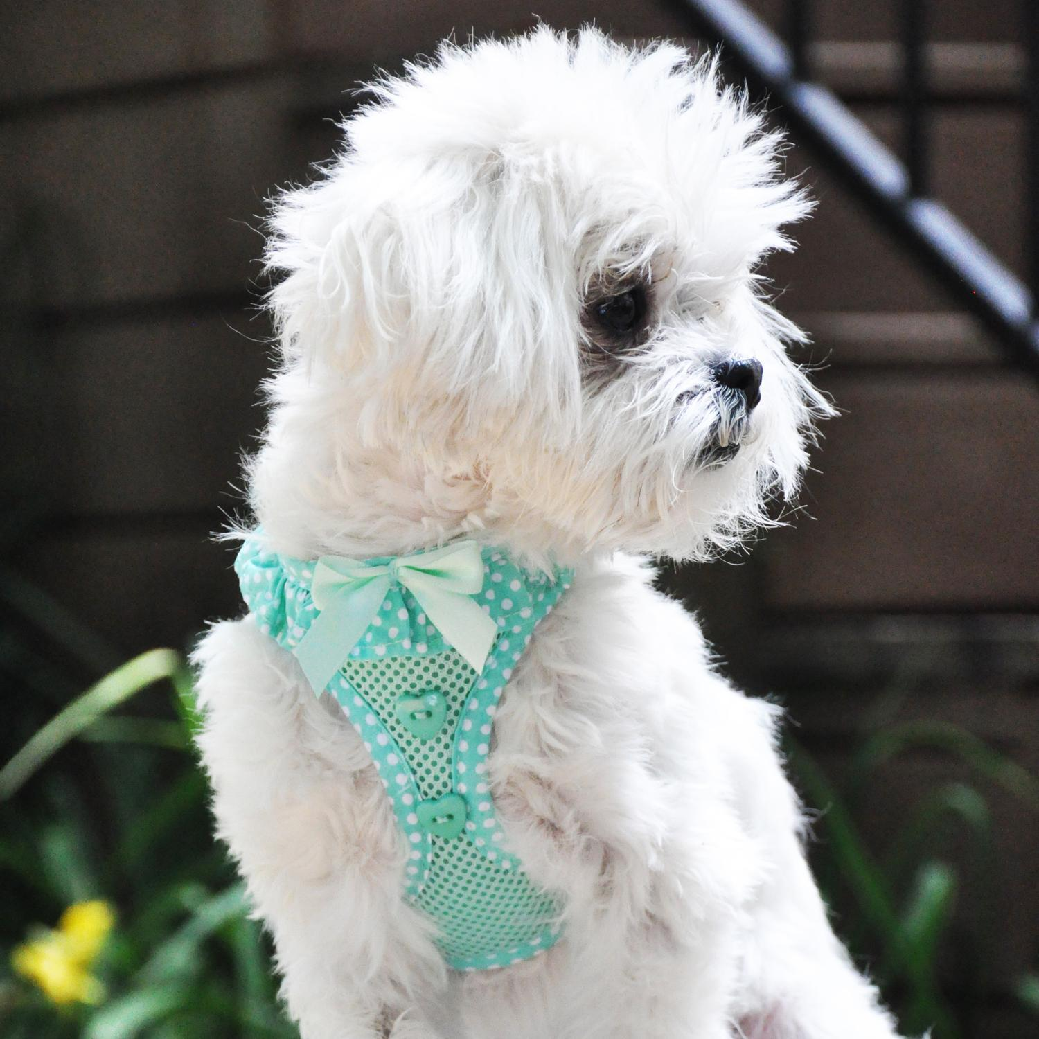 dog in teal mesh harness