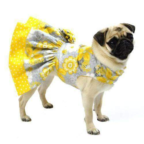 dog in yellow dress
