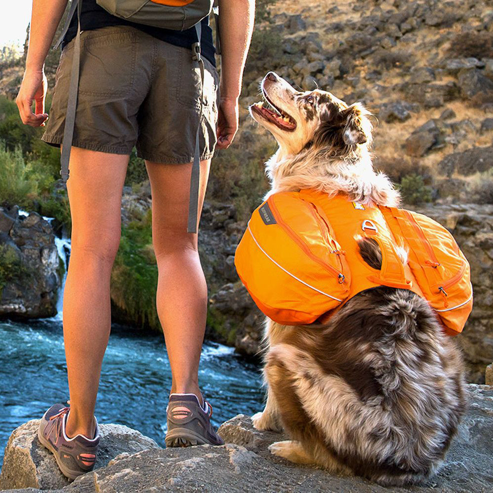 dog with woman outdoor