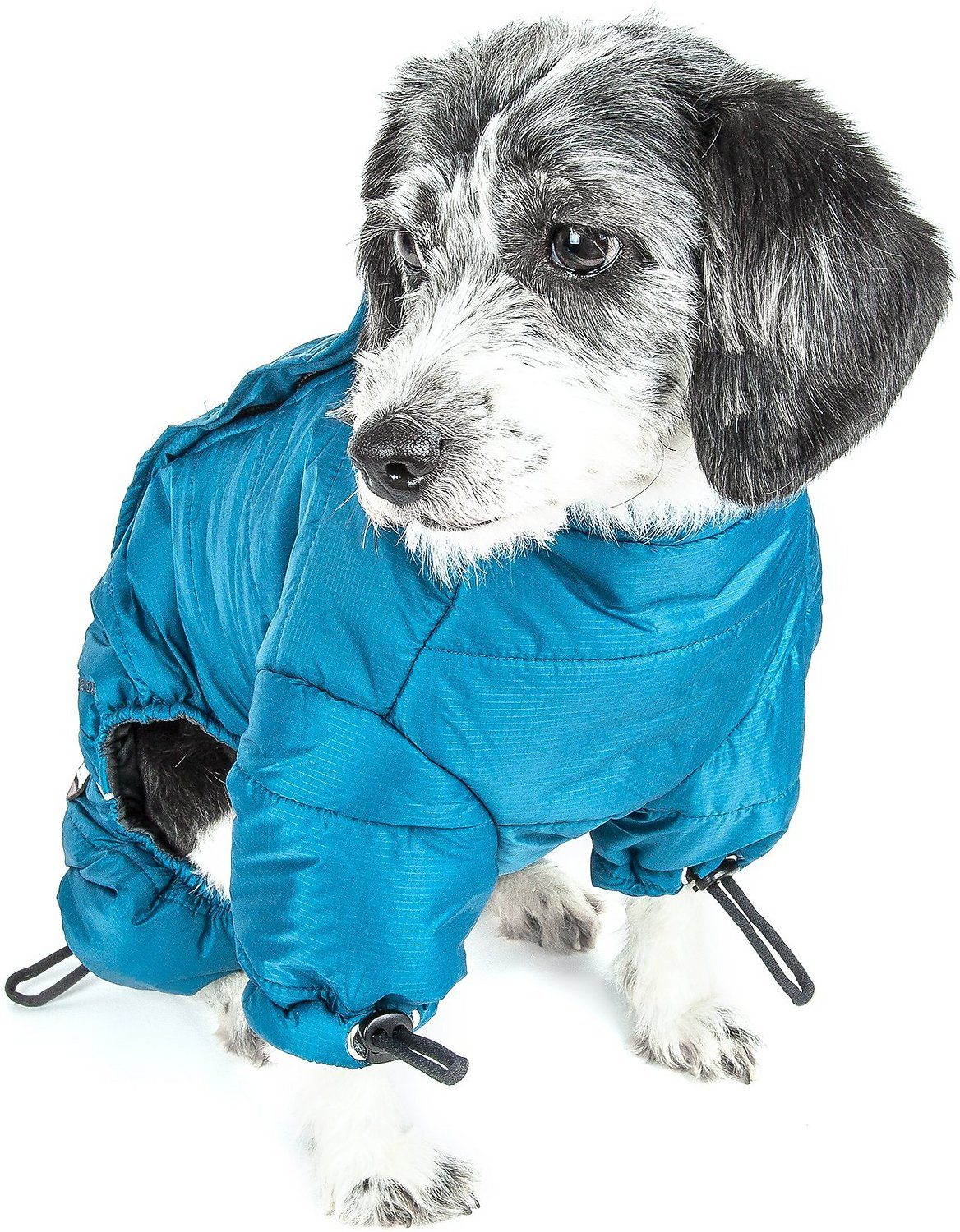 dog in helios jacket
