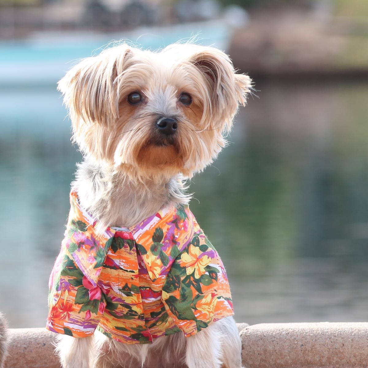 dog in colorful Hawaiian shirt