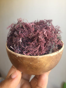 Sea Moss aka Irish Moss