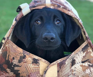 5 SOLID TIPS ON TRAINING A NEW PUP