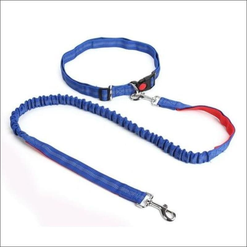 Pet Dog Running Leashes Hands Freely Great Walking - Pets