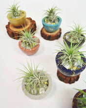 "Load image into Gallery viewer, Small Pot with Air Plant (1.5"" x 2.75"")"