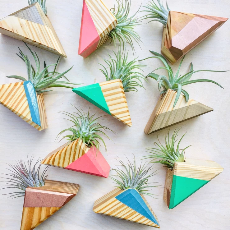 Triangle Air Plant Magnet - Air Plant Included