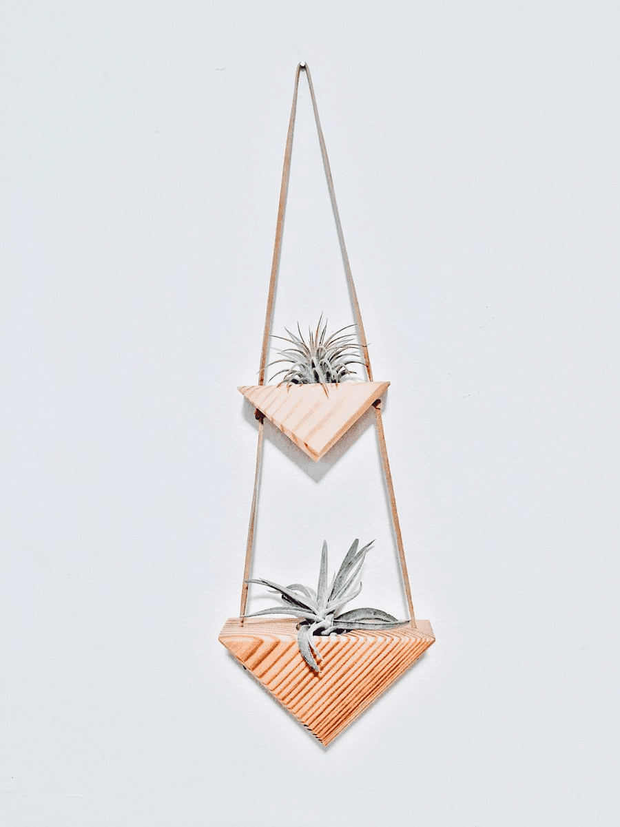 Triangle Wall Hanging vol. 2 - Air Plants Included