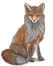 Load image into Gallery viewer, Sitting Fox Art Print