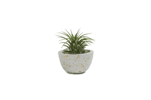 "Small Pot with Air Plant (1.5"" x 2.75"")"