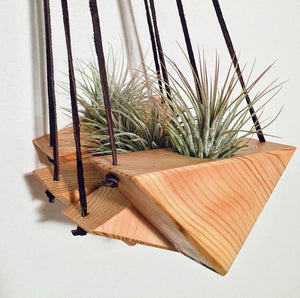 Small Reclaimed Wood Triangle Air Plant Hanger - Air Plant Included