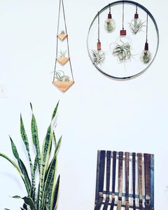 Triple Triangle Air Plant Wall Hanging - Air Plants Included