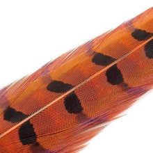 Load image into Gallery viewer, Wapsi Pheasant Ringneck Tail Feathers