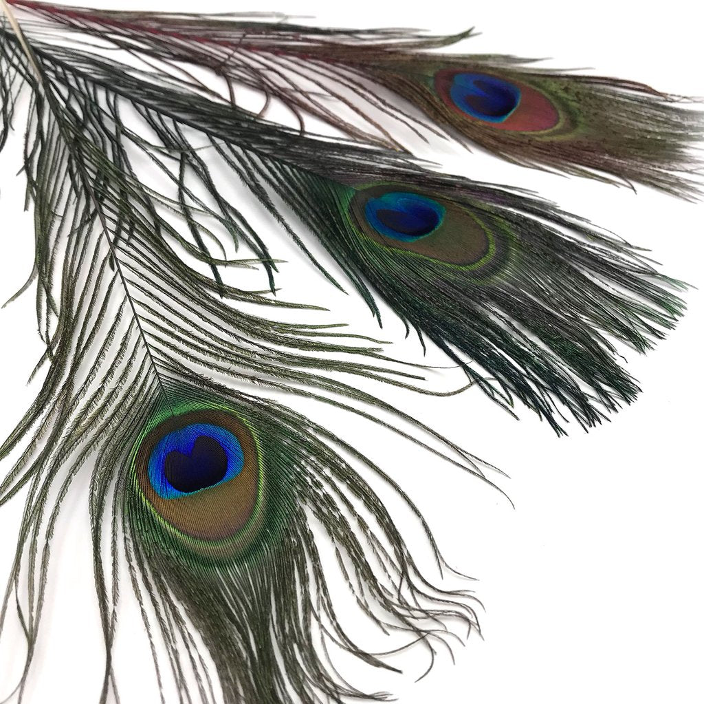 Hareline Dubbin Peacock Eyed Sticks