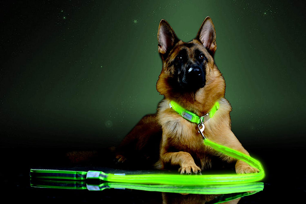 60%OFF-Light-Up Dog Leash