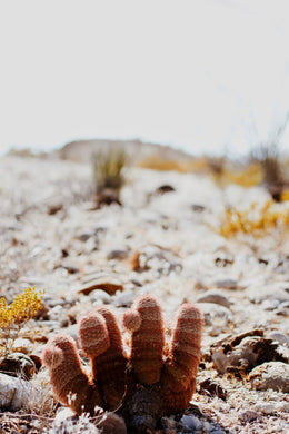 HEARTS & BONES PHOTOGRAPHY - MAGICAL CACTUS