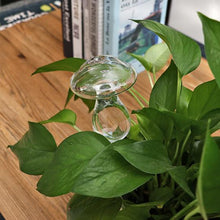 Load image into Gallery viewer, 2 Pcs Self-Watering Plant Glass Bulbs