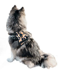 Wild Child Cooling Harness - Pomskie Pack Supply