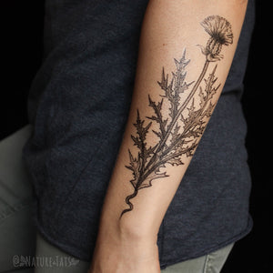 Purple Thistle Flower Temporary Tattoo